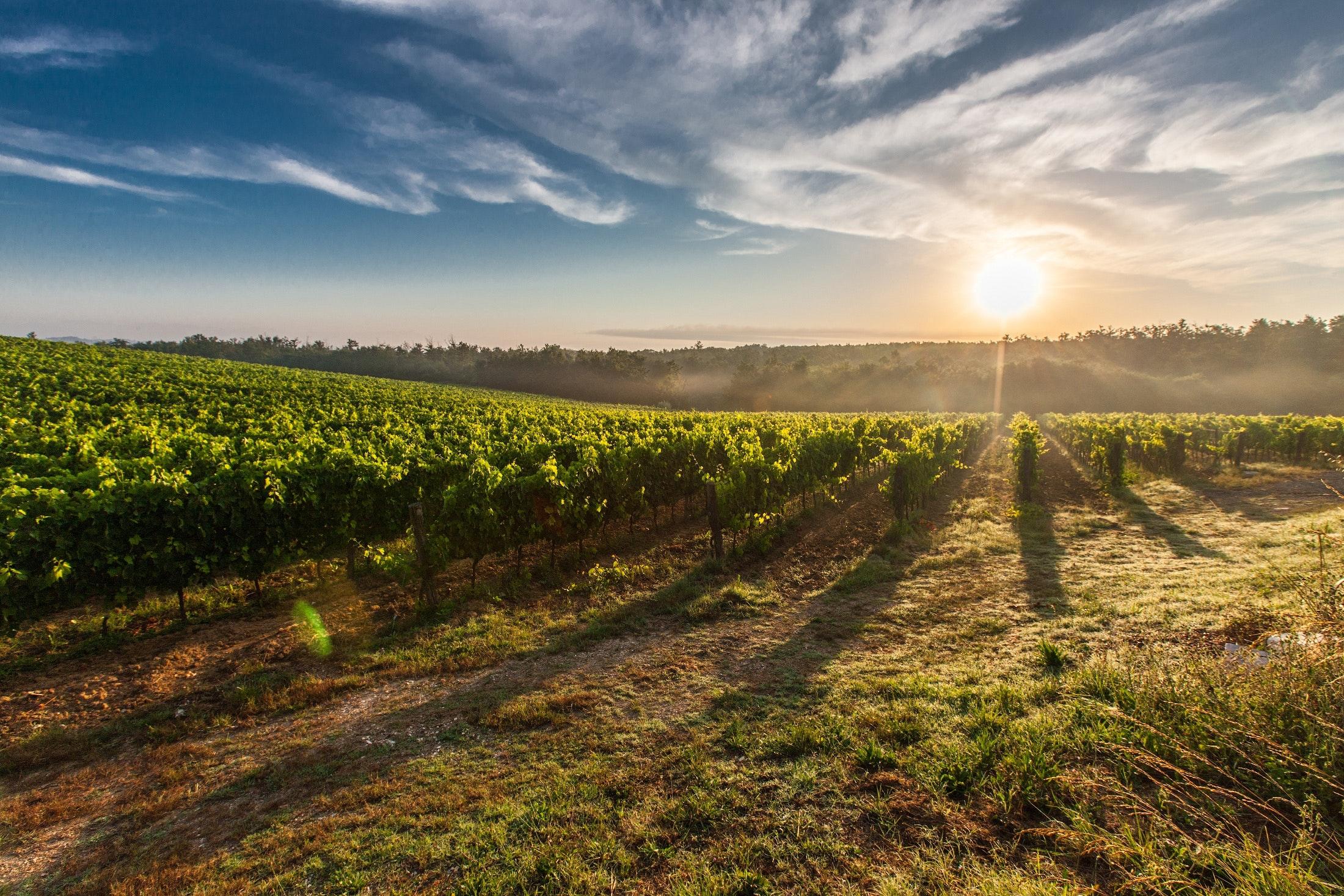 Come avviare la produzione del vino in un settore che cresce